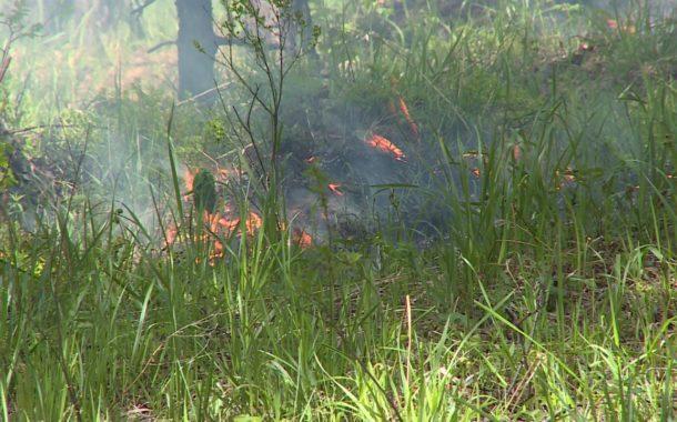 Лесной пожар в Новоуральске