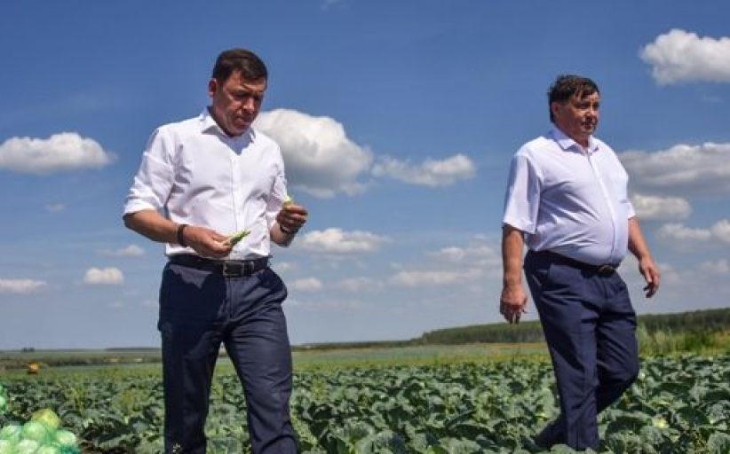 Евгений Куйвашев ввёл режим ЧС в аграрных территориях Свердловской области из-за засухи