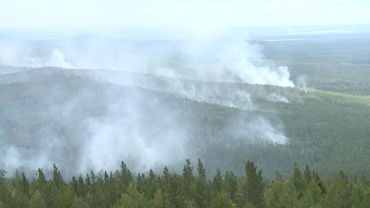 Полицейские Новоуральска нашли поджигателя лесов НГО